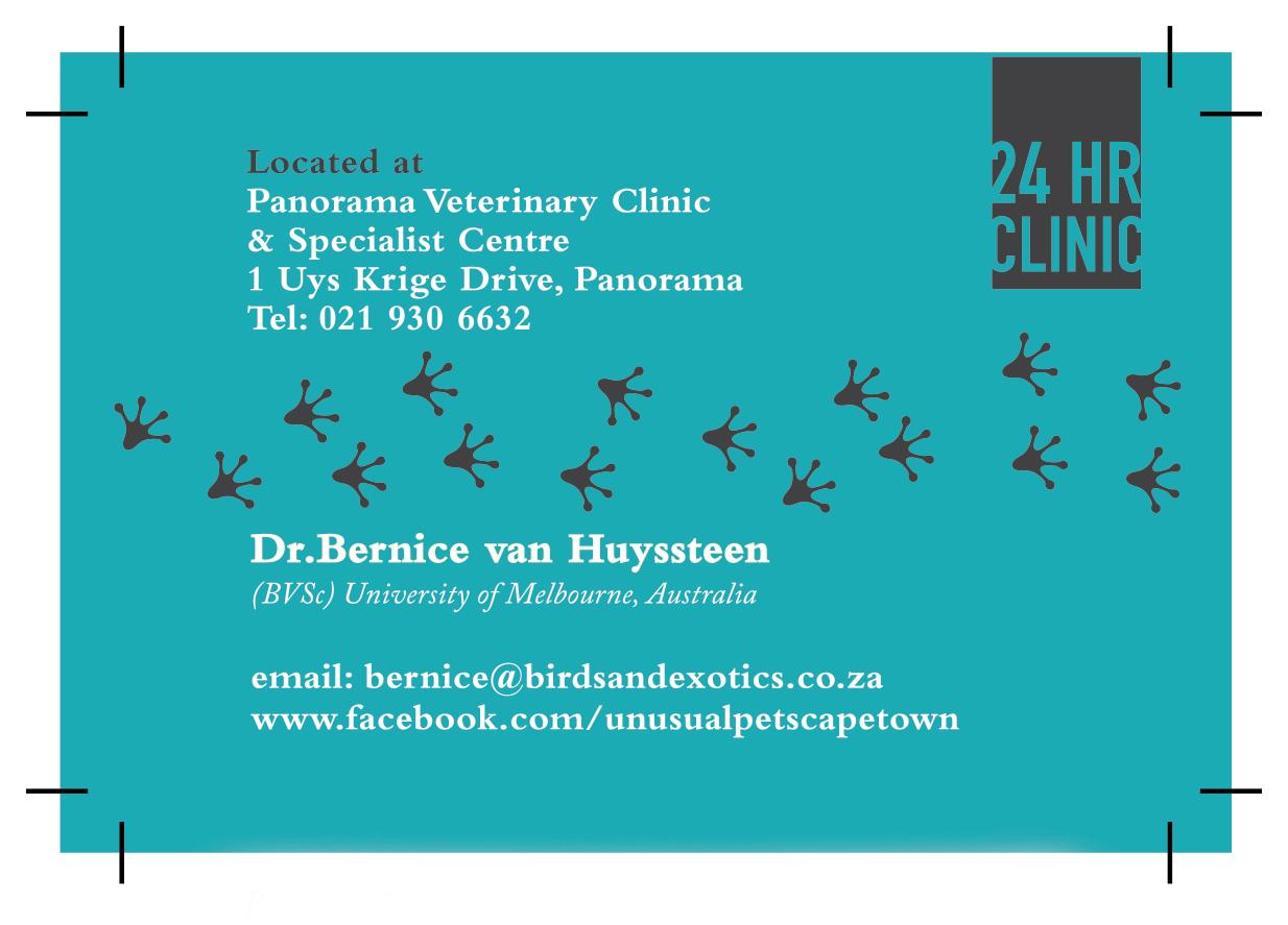 birdexotic clinic bcard final copy 2 - LOGO DEVELOPMENT